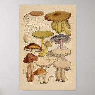 Vintage Mushrooms Varieties Green Purple Art Print