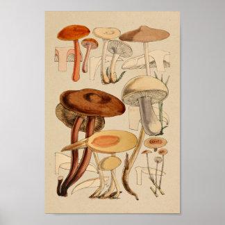Vintage Mushrooms Varieties Red Brown Art Print