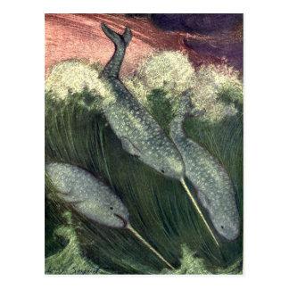 Vintage Narwhals Whales, Marine Life Ocean Animals Postcard