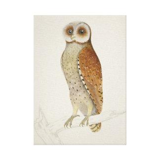 Vintage Naturalist Oriental Bay Owl Canvas Print