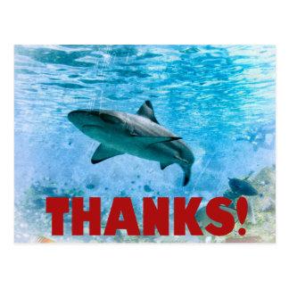 Vintage Nautical Stripe Shark Thank You Postcard