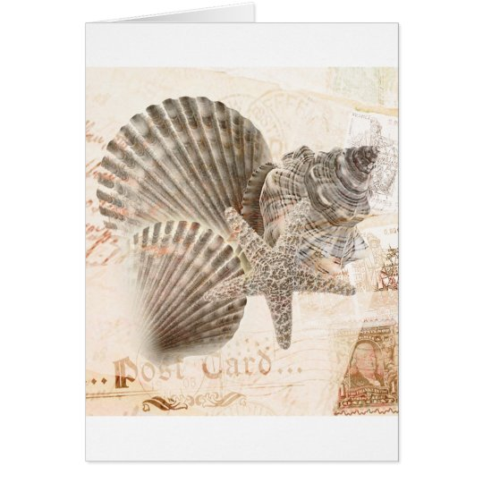 Vintage nautilus starfish seashells card