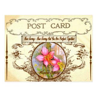 Vintage New Jersey State Flower Postcard