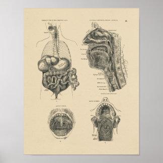 Vintage Nose Throat Anatomy 1880 Print