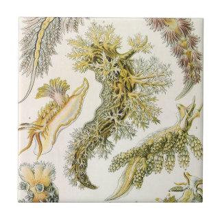 Vintage Nudibranchia, Sea Slugs by Ernst Haeckel Tile