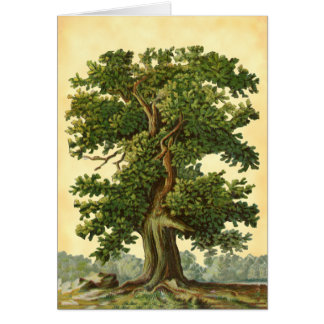 Vintage Oak Tree Faux Parchment Blank Art Card