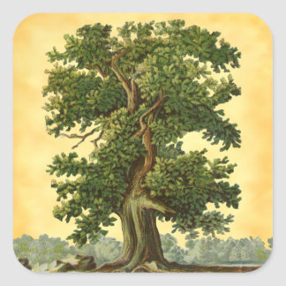 Vintage Oak Tree on Faux Parchment Stickers