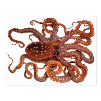 Vintage Octopus Macropus, Marine Aquatic Animals Postcard