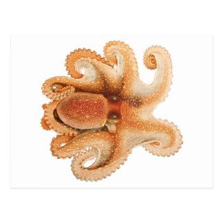 Vintage Octopus Salutii, Marine Aquatic Animals Postcard