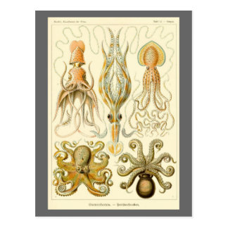 Vintage Octopus Squid Gamochonia by Ernst Haeckel Postcard