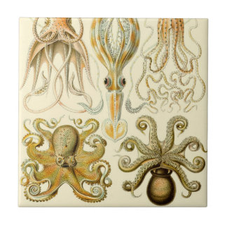 Vintage Octopus Squid Gamochonia by Ernst Haeckel Tiles