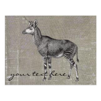 Vintage Okapi Postcard