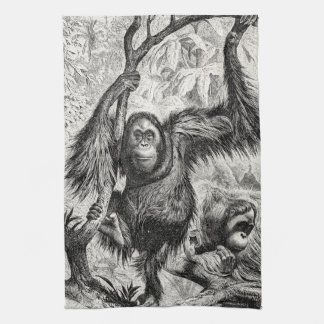 Vintage Orangutan Illustration -1800's Monkey Kitchen Towel