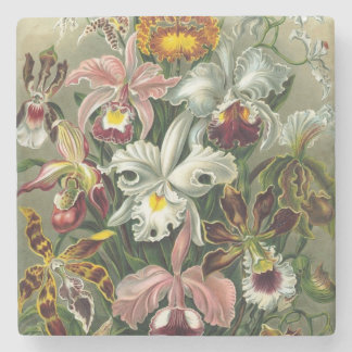 Vintage Orchids - Art Forms of Nature Ernst Haecke Stone Coaster