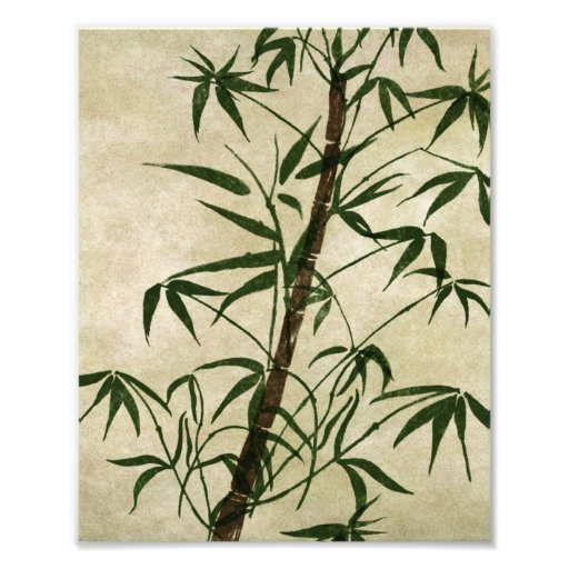 Vintage Oriental Bamboo 1 Photographic Print