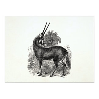 Vintage Oryx Antelope Gazelle Personalized Animals Card