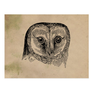 Vintage Owl Drawing Postcard