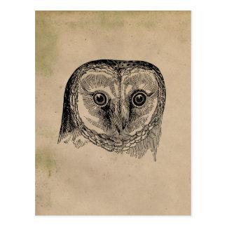Vintage Owl Drawing Postcard