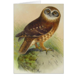 Vintage Owl On Rock Card