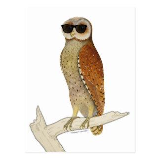 Vintage Owl Wearing Sunglasses Postcard
