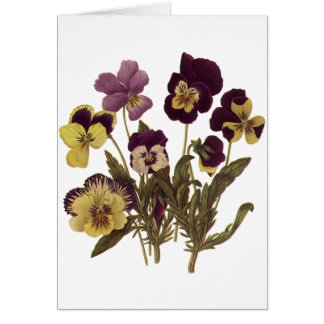 Vintage Pansies in Bloom, Floral Garden Flowers Card