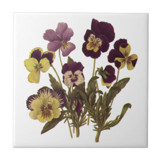 Vintage Pansies in Bloom, Floral Garden Flowers Tile