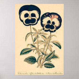 Vintage Pansies Poster
