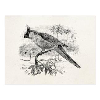 Vintage Parakeet Tropical Bird Illustration Postcard