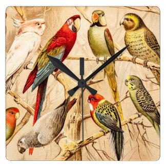 Vintage Parrot Cockatoo Conure Parakeet Cockatiel Clock