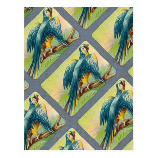 Vintage Parrot Print Postcard