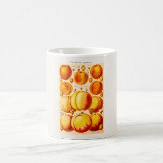 Vintage Peaches Apricots Antique Peach Apricot Coffee Mug