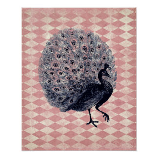 Vintage Peacock on Pink Argyle Poster