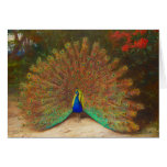 Vintage Peacock Painting Greeting Card