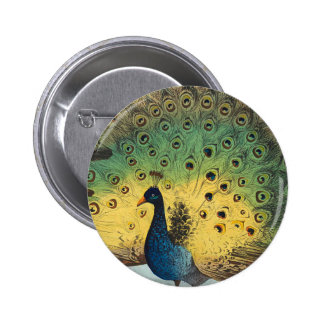 Vintage peacocks and a cat 2 inch round button