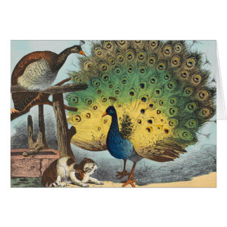 Vintage peacocks and a cat card