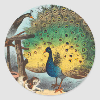 Vintage peacocks and a cat classic round sticker