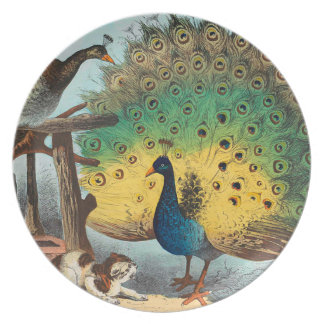 Vintage peacocks and a cat dinner plates