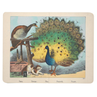 Vintage peacocks and a cat journal