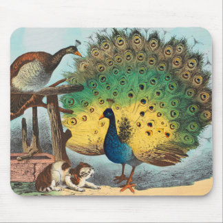 Vintage peacocks and a cat mouse pad