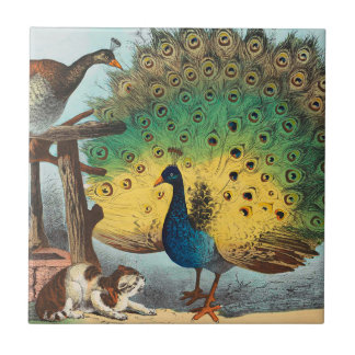 Vintage peacocks and a cat tile