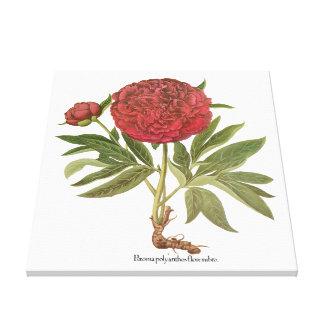 Vintage Peony Peonies Flowers by Basilius Besler Gallery Wrapped Canvas