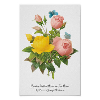 Vintage Persian Yellow Rose Tea Roses by Redoute Poster