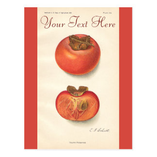 Vintage Persimmon Post Card