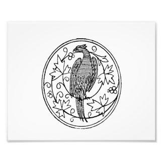Vintage pheasant jagged drawing.png photo print