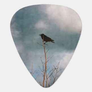 Vintage photograph of a crow in a tree guitar pick