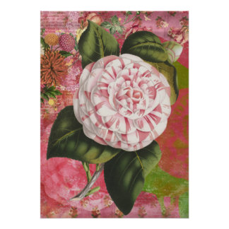 Vintage Pink and White Camellia Poster