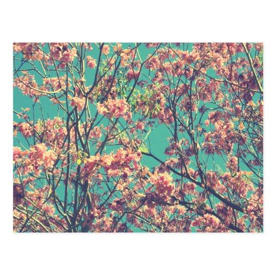 Vintage Pink Flowers Photograph Postcard