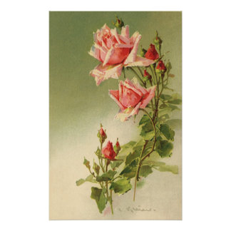 Vintage Pink Garden Roses for Valentine's Day Posters