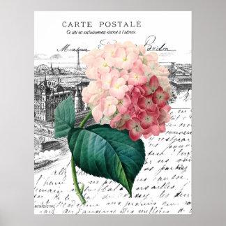Vintage Pink Hydrangea Poster