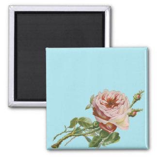 Vintage Pink Rose on Pale Aqua Square Magnet